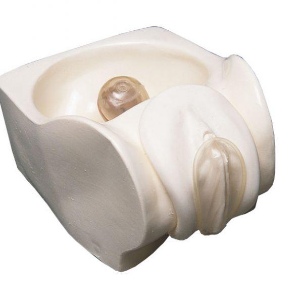 Modelo Anatómico Vulva para colocación de preservativo femenino