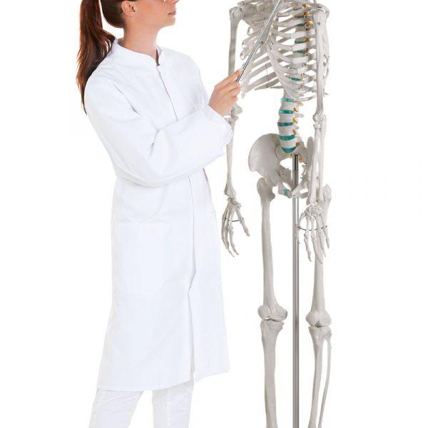 """Esqueleto didáctico """"OSCAR"""""""
